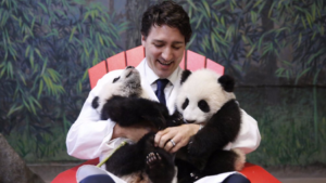 Canadian Prime Minister Justin Trudeau cuddles with pandas at the Toronto Zoo.