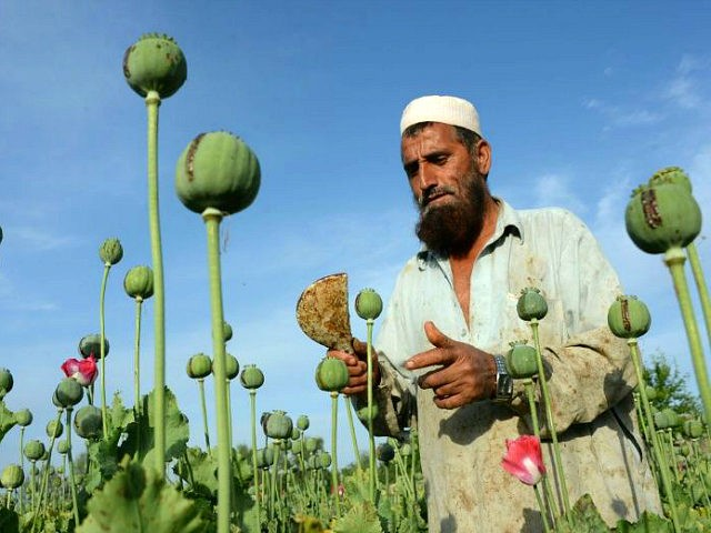 Sixty percent of Taliban funding said derived from illegal opium trade