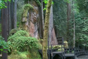 The Bohemian Grove