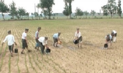 As N. Korea celebrates ICBM, photo shows soldiers watering dried up rice paddies