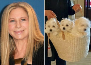 Dog days: Streisand flies her pooches on private jet to see her sing in London