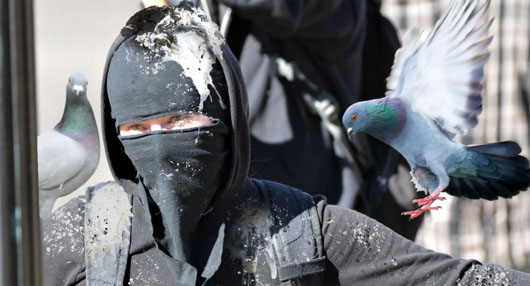 With downing of statues, pigeons seek relief