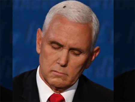 Pence 'dismantled Harris': Fly saves the day for Democrats and their media