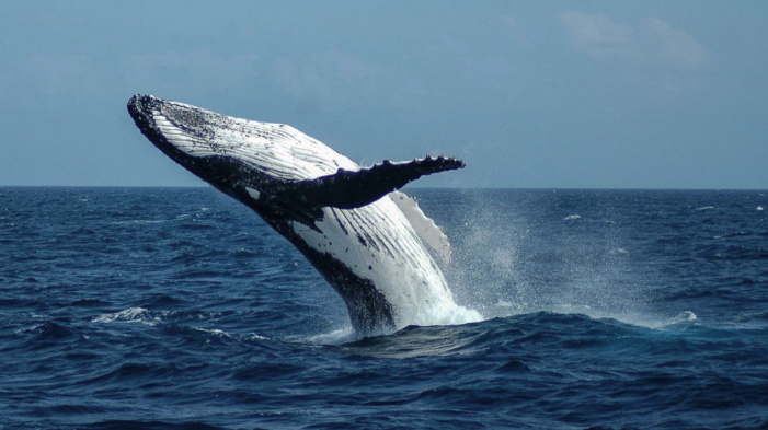 Diver swallowed by whale thought it was lights out: 'All I could think of was my boys'