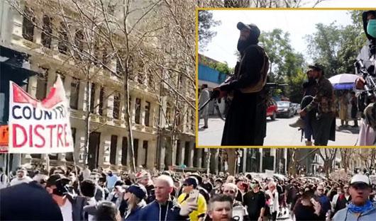 'Slightly less tyranny': Desperate Australians approach Taliban to overthrow regime
